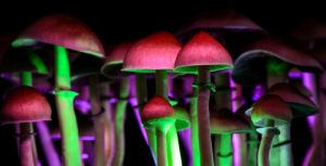 magic mushrooms with psilocybin